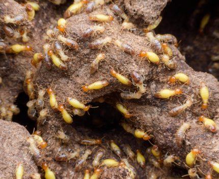 雨季到了蟲蟲危機!小心「白蟻入侵」蛀光傢俱